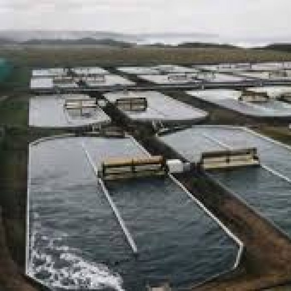 Profile picture of WA Aquaculture Project - storyID fnf4009