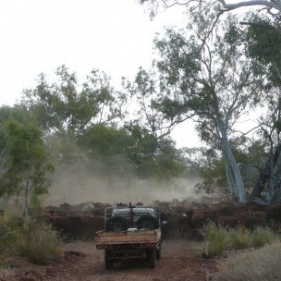 Profile picture of Northern Territory Freehold Land Owned by Traditional Owners - storyID fnf4011