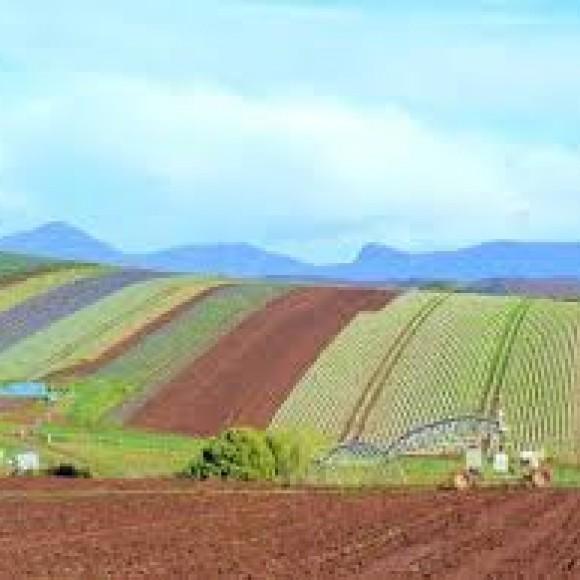 Profile picture of Vegetable Farm Owner Operator in Tasmania Seeks Equity Partner - storyID 4042