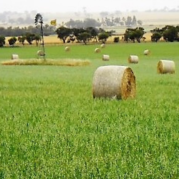 Profile picture of Sustainable Farm Business Family Seeks Investment Partner to Scale-up in Wheat Belt of Western Australia - storyID 4094