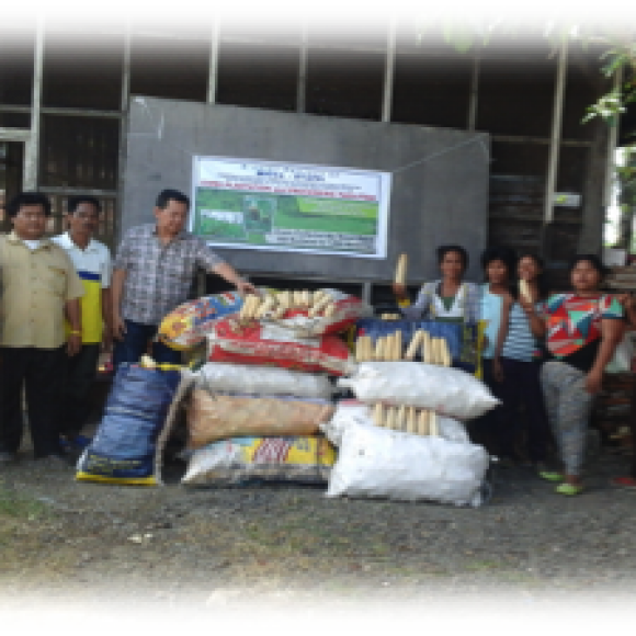 Profile picture of Mindanao Palm Oil Plantation Seeks China Market Access Partner - storyID fnf4060